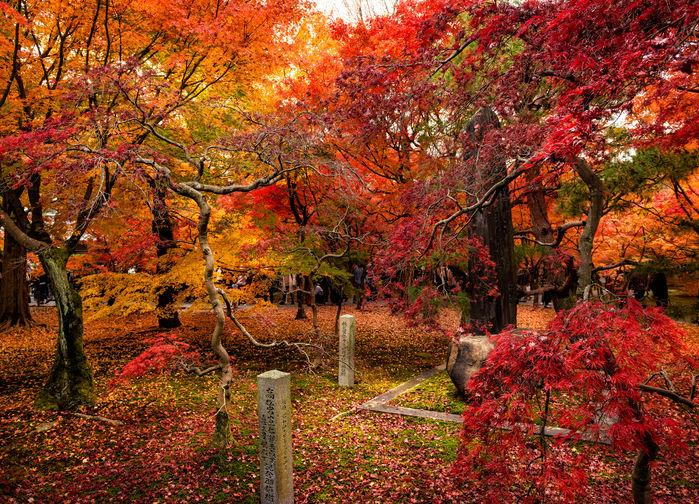 Japansk høst