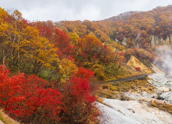 Høst i Djeveldalen, Hokkaido