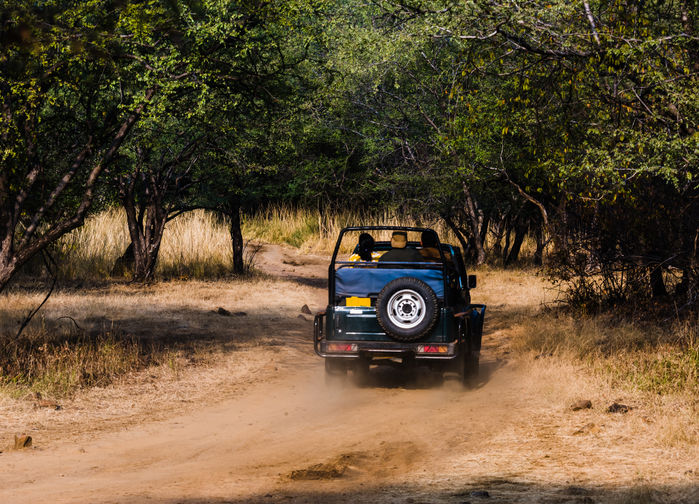Jeep i Ranthambore